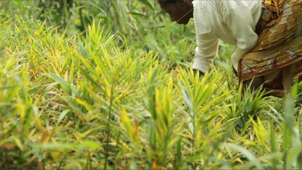 Chanel y el freno a la desertización de la reserva de Vohimana