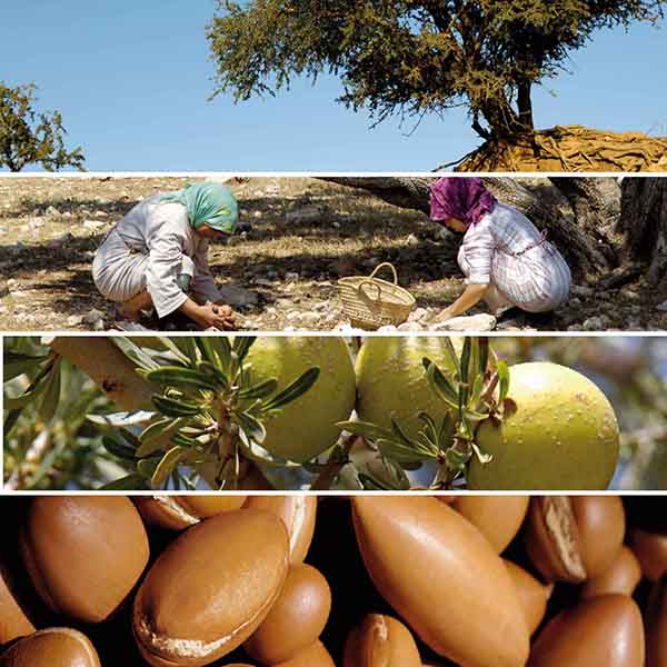 PG23345-Brochure Galenic 2008.qxp