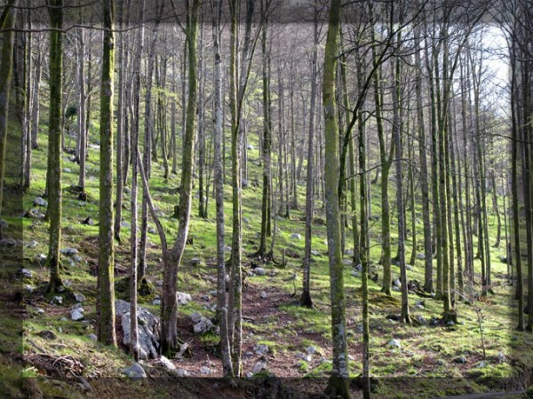 Naturvital y Bosques Sostenibles