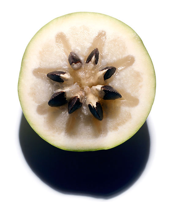 Vu-Sua-fruta
