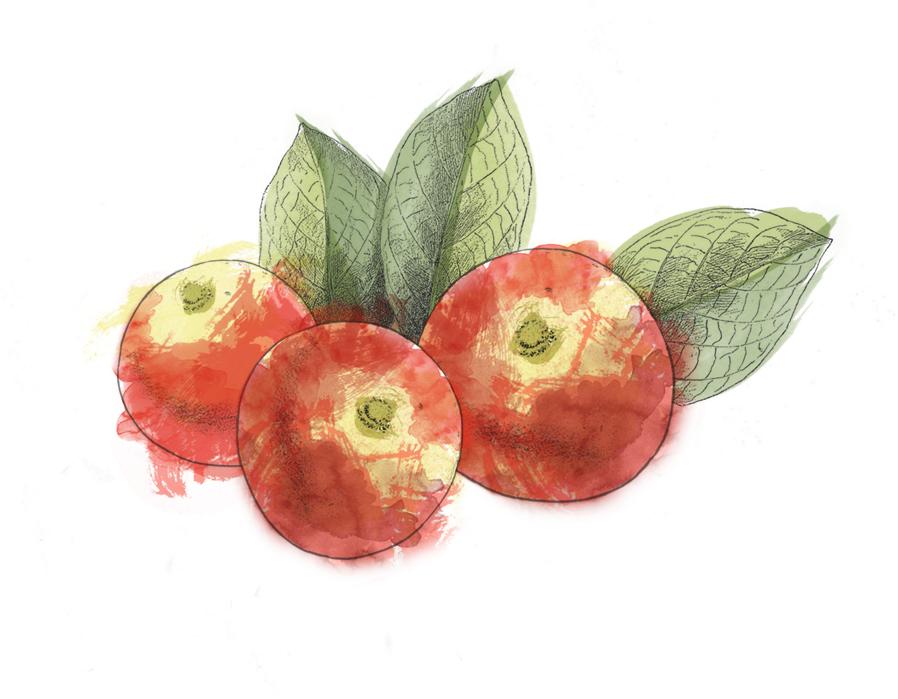 Fruto camu camu