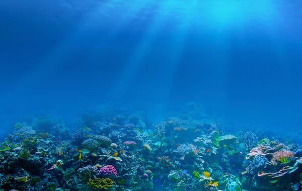 Crisderma y el Día Mundial de los Océanos