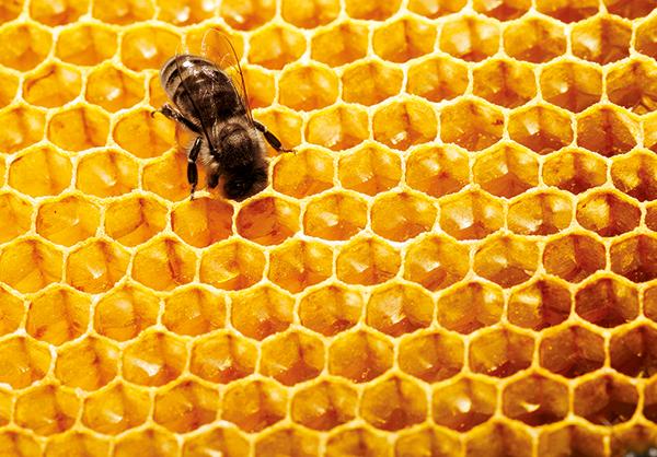 Abeille Royale de Guerlain y la conservación de la abeja negra